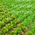 Is purchasing organic vegetables blowing your grocery budget? Find out the 9 veggies that could save you tons of money!
