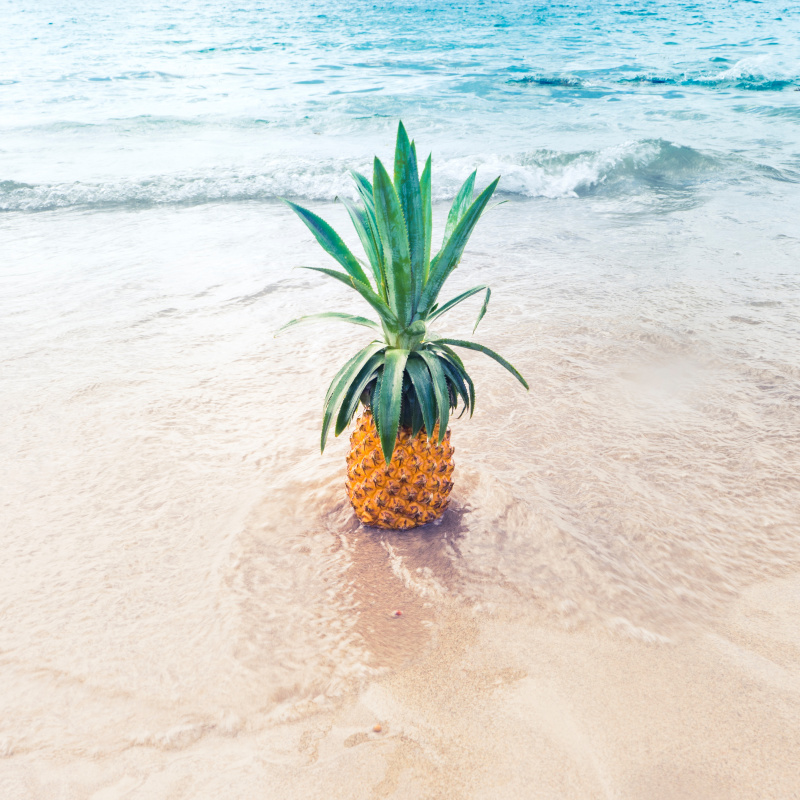 Pineapple in the shallow ocean water at the beach