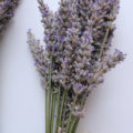 Homemade Recipes Using Lavender For Your Body