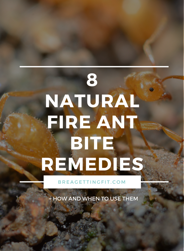Natural Fire ant bite remedies